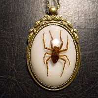Wreathed Spider Specimen in Resin Cameo Necklace