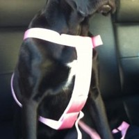 Cruising Companion Car Harness - Light Pink at BaxterBoo