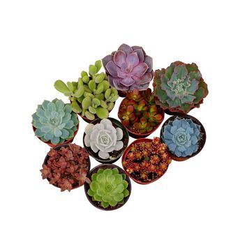 So into this design on Fab! 4 Succulents for Centerpieces #FabForAll