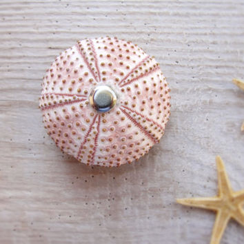 Sea Urchin Magnet Beach Memories Vacation Dreaming
