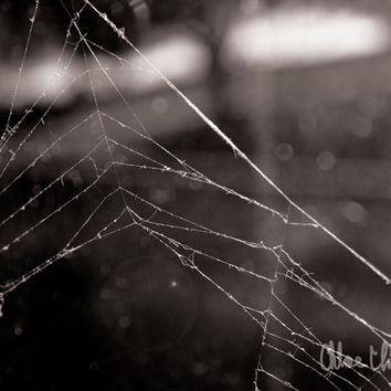 Black & White Photography - Tattered - fine art print, home decor, wall photo, spiderweb, bokeh