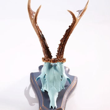"Stylish wall sculpture: Deer Antler with scull, mounted-horn ""Paul"""