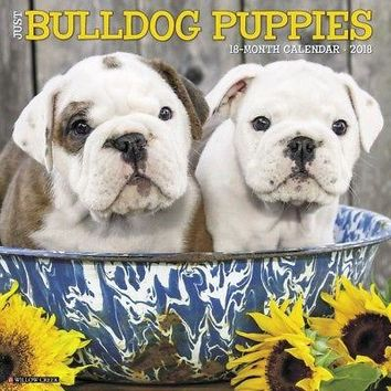 Just Bulldog Puppies Wall Calendar, Bulldog by Willow Creek Press