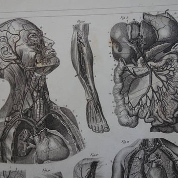 ANATOMY old print 1849 original antique pictures of blood vessels head torso circulatory system arteries vintage illustration small poster