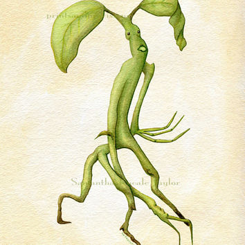 Pickett the Bowtruckle Art Print on Fine Art Paper - Fantastic Beasts and Where to Find them - Scientific Botanical Illustration