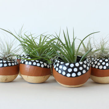 Air Plant Planter with Air Plant - Tan, Black & White Dots