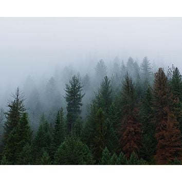 Foggy Forest of Indescribable Awe Wall Art Print - Many Sizes