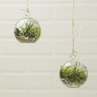 Mini Hanging Air Plant Terrarium Kit, Set of 2