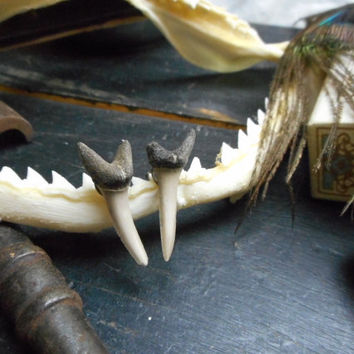 The Deep No. 3 Genuine Shark teeth and surgical steel post earrings