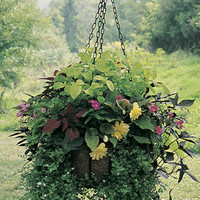 Very Large Baskets - MEDIUM HANGING GARDEN-EURO CLASSIC
