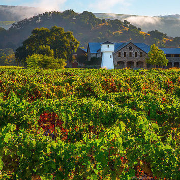 Wine Country Print, Napa Valley Print, California Print, Sonoma Print, Fine Art ,Canvas Gallery Wrap, Winery, Matted Wall Prints, Wall Decor