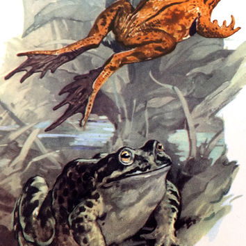 Frogs, Toads, Newts, Vintage School Poster, Childs Bedroom, Wall Poster, Macmillans Nature Class Pictures