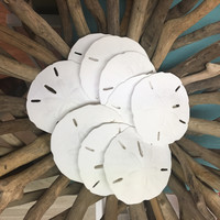 Bag of Mini Sand Dollars Set of 18 (2-1/2 to 3 inch)