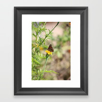 Red Admiral Butterfly Framed Art Print by Theresa Campbell D'August Art