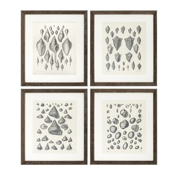Eichholtz Coquillages Print II (set of 4)