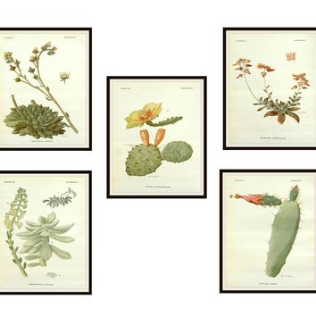 "Set of 5 Vintage Botanical Art Print Poster Reproductions ""Cactus and Succulents"" Set Unframed 8 x 10"" or 11 x 14"""