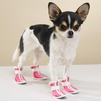 Sporty Dog Boots in Pink in XXS