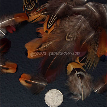 Bulk Pheasant Wholesale Feathers Natural Small Feather Craft Jewelry Making Supplies Millinery Quality Short DIY Feathers, Cheap Feathers 60