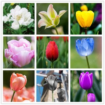 ZLKING 2 pcs Chinese Tulip Bulbs 10 Colors Mix Bonsai Flower Seeds Indoor Plants Flowers Home Garden Plants From Netherlands