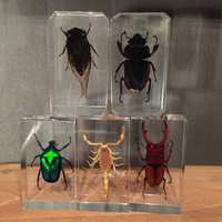 Lucite Insects