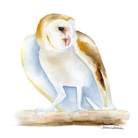 Barn Owl Watercolor Painting - Giclee Print - 8 x 10
