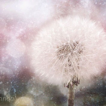 Interconnected - fine art photograph, dandelion puff photo, floral print, pastel pink, mauve, botanical wall art, flower photography