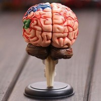4D master Human brain model structure model assembled Anatomy dimensional model 32pcs set free shipping