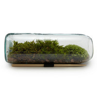 MOSS TERRARIUM BOTTLE | Glass Terrarium Gift | UncommonGoods