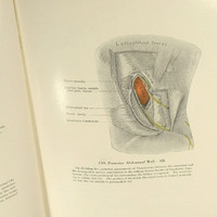 Vintage Medical Book Grants Atlas Of Anatomy Third Edition Textbook