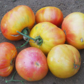 Oaxacan Jewel Tomato Seeds + FREE Bonus 6 Variety Seed Pack - a $30 Value!