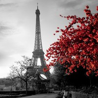 Eiffel Tower and Red Flower Shower Curtain (Size: 180cm by 180cm, Color: Multicolor)