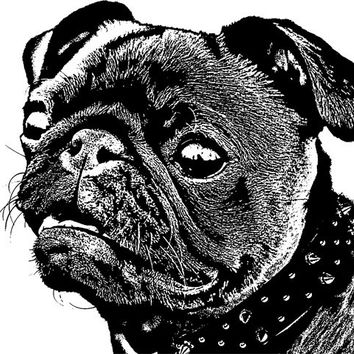 black pug dog spike collar png clip art Digital graphics Image Download animals pets dogs printable art