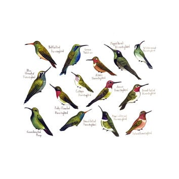 Hummingbirds of North America Field Guide Art Print