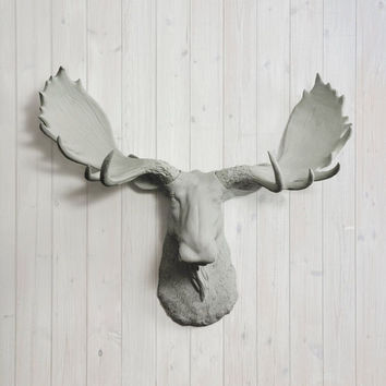 The Alberta Large Gray Faux Taxidermy Resin Moose Head Wall Mount | Gray Moose w/ Colored Antlers