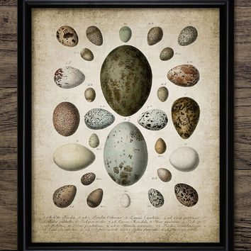 Bird Egg Print - Bird Egg Decor - Bird Watcher - Egg Chart - Bird Lover - Digital Art - Printable Art - Single Print #100 - INSTANT DOWNLOAD