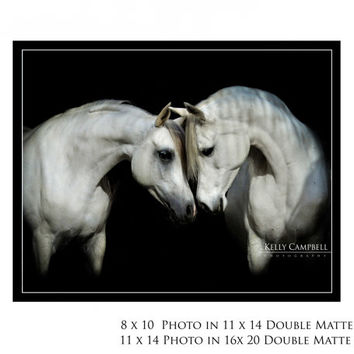 First Meeting /Photo Print on Double Matted Frame/ Canvas/ White Home Decor / House wear / Arabian Horse / Equine Photography /