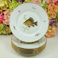 6 Richard Ginori Porcelain Dinner Plates Scalloped Fish Sealife Insects Quenelle