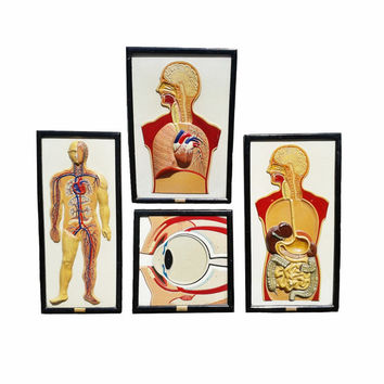 Rare Human Anatomy Hand Painted Plaster Frames / Vintage French Human Anatomy Collection