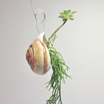 Land Snail Shell Succulent Planters, Hanging Plant Pots, Unique Succulent Planter Kit, Hanging Planter, Flower Pots