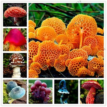 Free shipping!100pcs/bag Red Mushroom Garden Ornament Miniature Plant Pots Fairy DIY Dollhouse delicious easy grow