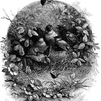 bird family nest printable art print clipart png download digital vintage image graphics digital stamp animal artwork