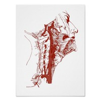 Old Anatomy Illustration Human vertebral arteries Poster