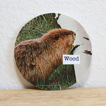 Funny Fridge Magnet With Woodchuck On It