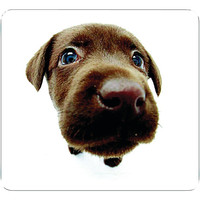 ALLSOP Chocolate Lab Mouse Pad 29304 29304 35286293044