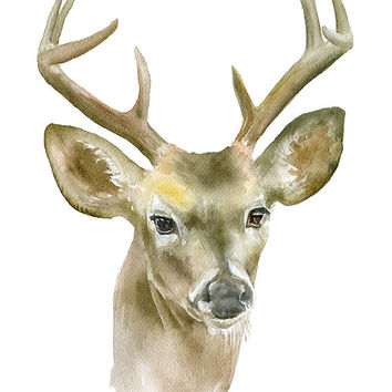 Deer Buck Watercolor