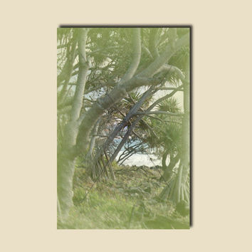 Palm Tree Canvas Art For Bathrooms. Rectangle Wall Art Sun Print. Noosa Nature Photography. Australian Sellers. Anthotype Process.