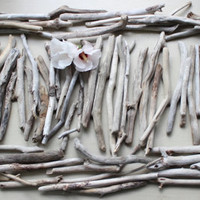 Large Instant Collection of 75 Driftwood Pieces for Crafting , Beach Wedding favors and home decor