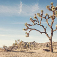 California Joshua Tree Desert Photography bohemian home decor boho print coachella valley decor Desert art travel photo