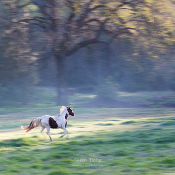 Horse Art, Running Horse Photography, Whimsical Morning Light, Misty California Print, Purple, Green, Horse Canvas, Fine Art, Nature Print