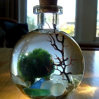 SALE Live Marimo Balls in Mini Globe Bottle Zen Pet Terrarium